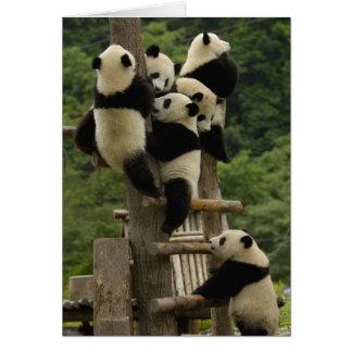 Cartes Melanoleuca d'Ailuropoda de bébés de panda géant)
