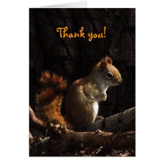 Cartes Merci d'écureuil au soleil