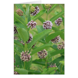 Cartes Milkweed commun