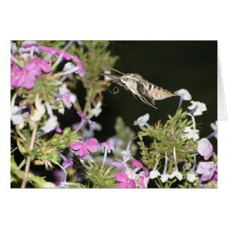 Cartes Mite et Phlox de colibri