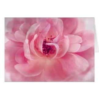 Cartes Modèle rose d'arrière - plan de Bokeh de jardin