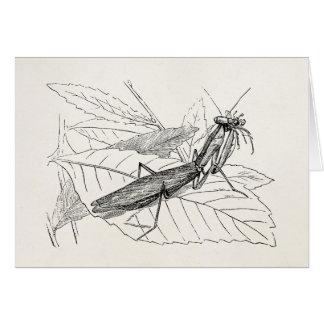 Cartes Modèle vintage d'insecte de mante de prière