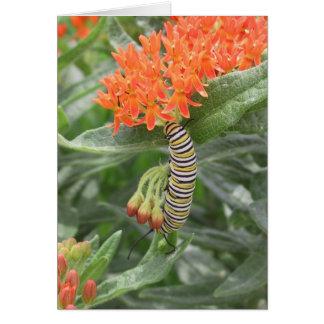 Cartes Monarque Catterpillar sur l'mauvaise herbe de