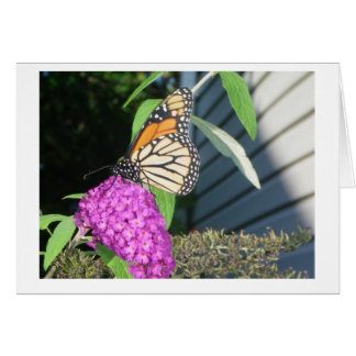 Cartes monarque sur le buisson de papillon