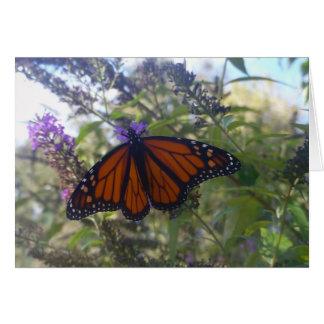Cartes Monarque sur le papillon Bush