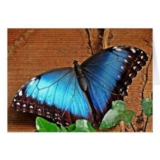 Cartes Morpho bleu - papillon