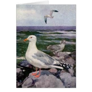Cartes Mouettes d'harengs sur Shoreline rocheux