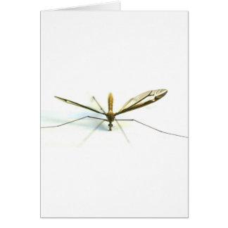 Cartes moustique