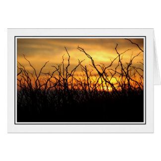 Cartes Mûres au coucher du soleil