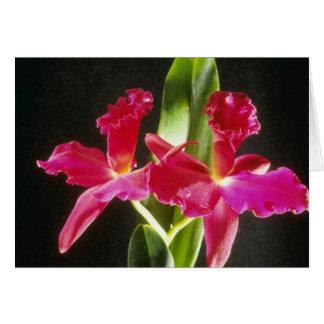 "Cartes Naokazu fleurs ""de boule de feu"" (Potinara)"