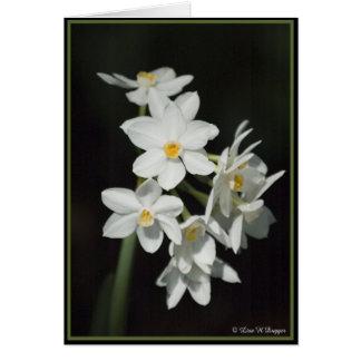 Cartes Narcisse de Paperwhite