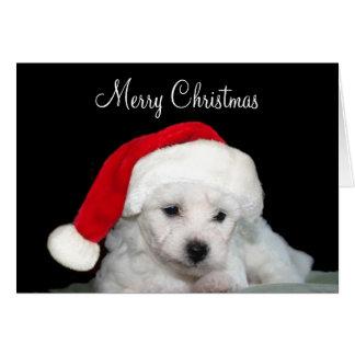 Cartes Noël de Bichon Frise