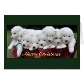 Cartes Noël de chiots de Samoyed (4 semaines de)
