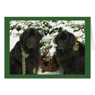 Cartes Noël de Newfie