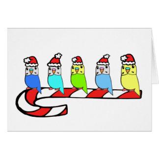 Cartes Noël de Perruches