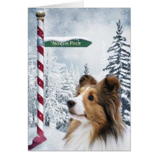 Cartes Noël de Sheltie