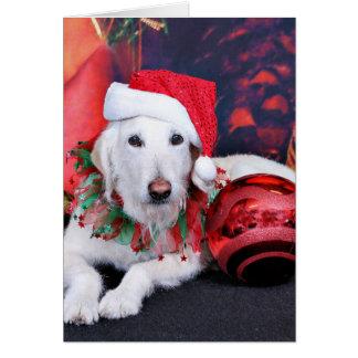 Cartes Noël - LabraDoodle - Izzy