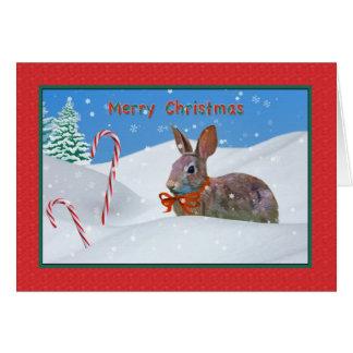 Cartes Noël, lapin, neige, sucres de canne