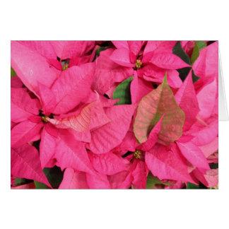Cartes Noël rose de fleur de poinsettia