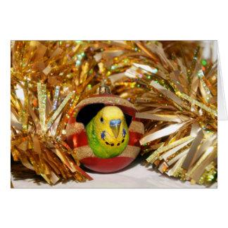Cartes Noël vilain de perruche