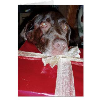 Cartes N'oubliez pas vos animaux familiers pour Noël !