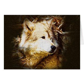 Cartes Observation de loup gris