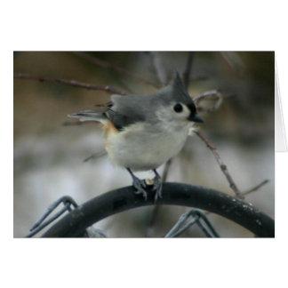 Cartes Observation d'oiseau