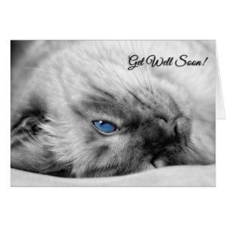 Cartes Obtenez à des souhaits bons le chat siamois