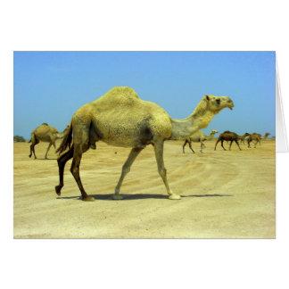 Cartes Oh jour heureux - chameaux dans le désert