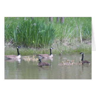Cartes Oies et oisons sur un étang