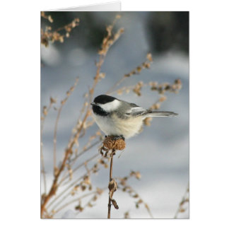 Cartes Oiseau