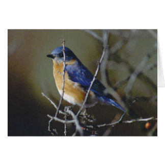 Cartes Oiseau bleu