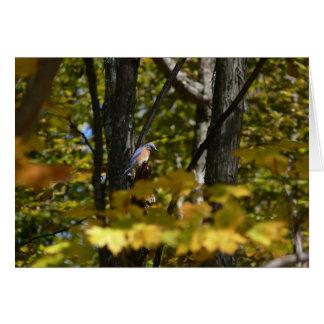 Cartes Oiseau bleu au soleil
