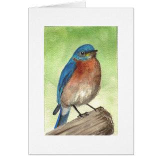 Cartes Oiseau bleu oriental