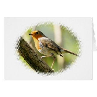 Cartes Oiseau de faune de Robin