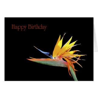 Cartes Oiseau de joyeux anniversaire de paradis