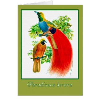 Cartes Oiseau du paradis