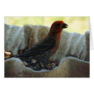 Cartes Oiseau roux