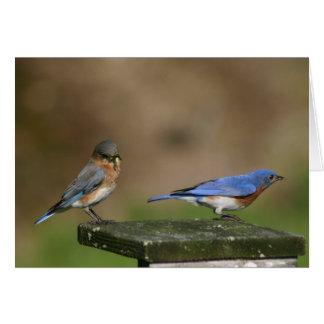 Cartes Oiseaux bleus
