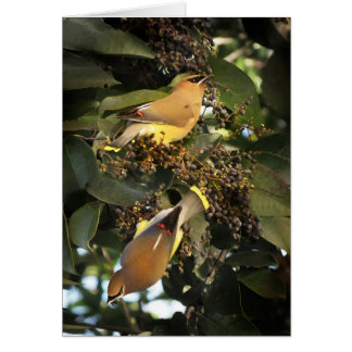 Cartes Oiseaux de jaseur de cèdre saluant