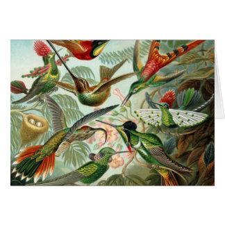Cartes Oiseaux vintages