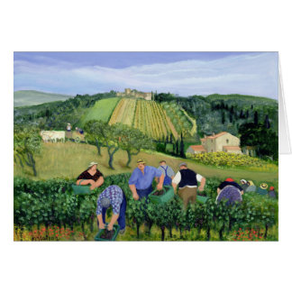 Cartes Olives et tournesols de vignoble