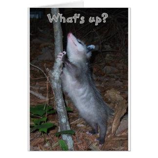Cartes Opossum