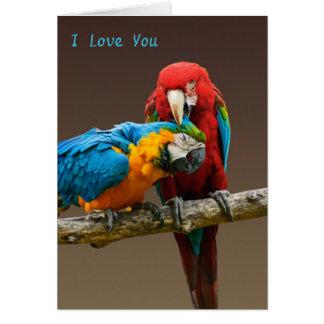 Cartes Or d'amour de perroquets et ara bleu de Scarlett