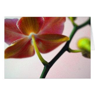 Cartes Orchidée de Haiku