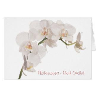 Cartes Orchidée de mite blanche