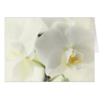 Cartes Orchidées