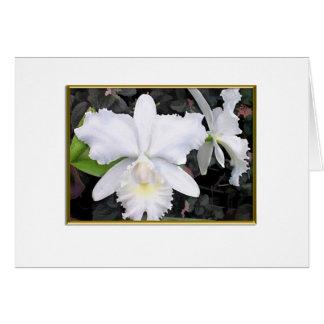 Cartes Orchidées blanches croquantes en blanc louche de