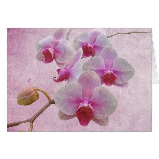 Cartes Orchidées de mite roses - Phalaenopsis