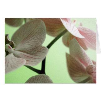 Cartes Orchidées sensibles